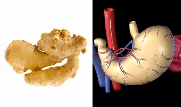 Фантастична схожість продуктів і людських органів, для яких вони корисні