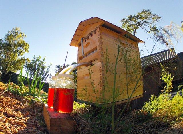 Вулик, який не потрібно відкривати, щоб дістати мед (відео)