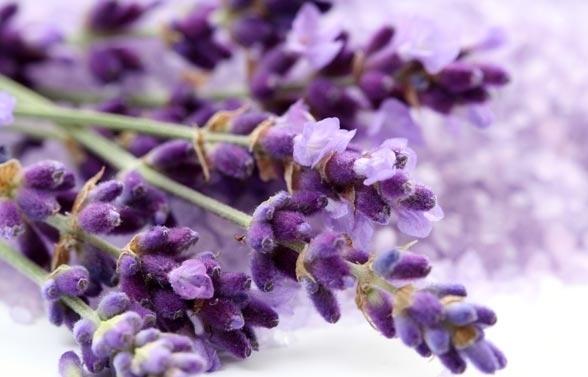 10 ароматів, що створюють затишок в домі