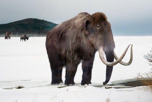 Американські вчені клонують мамонта з допомогою ДНК слона