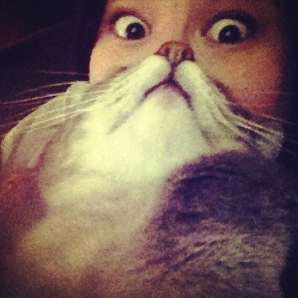 Борода з кота - нова інтернет розвага (фото)