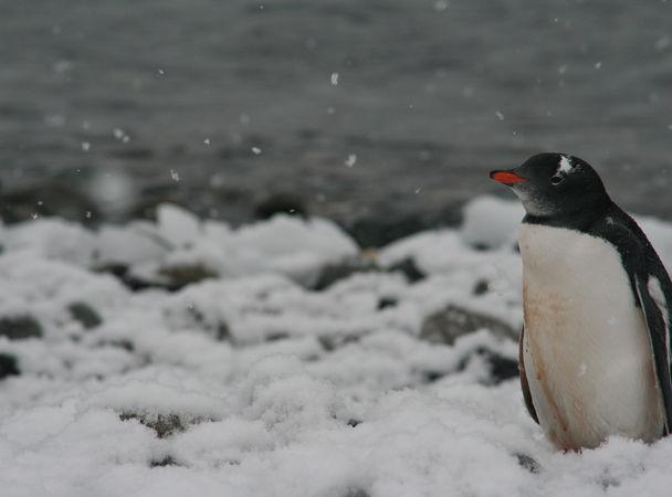 Перший в історії фільм про Антарктиду, знятий дроном (відео)