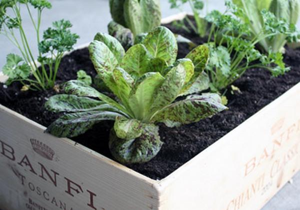 Садоводу на замітку. 15 хороших порад
