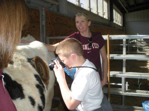 Навіщо коровам дірки в боці? Нова фермерська «мода» (фото)