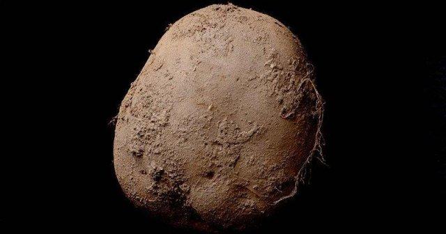 Американський фотограф продав на аукціоні знімок картоплі за € 1 млн.