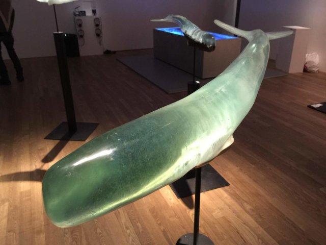 Прозорі світи всередині китів (фото)