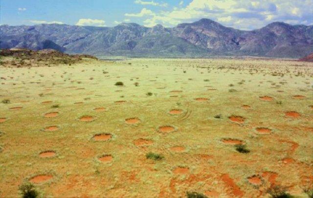 Розкрито таємницю «відьомських кіл» в пустелях (відео)