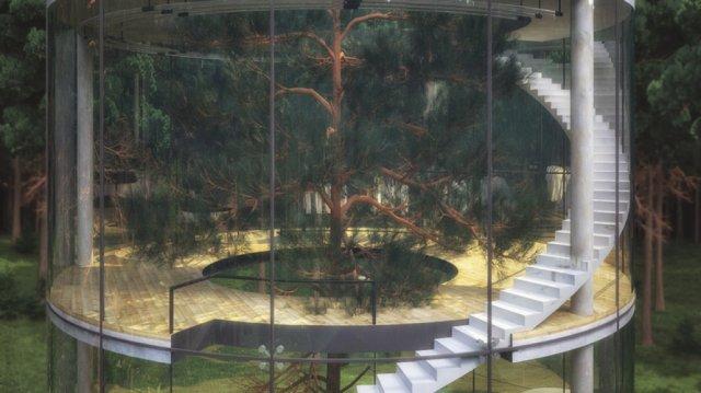 Скляний будинок навколо справжнього дерева (фото)