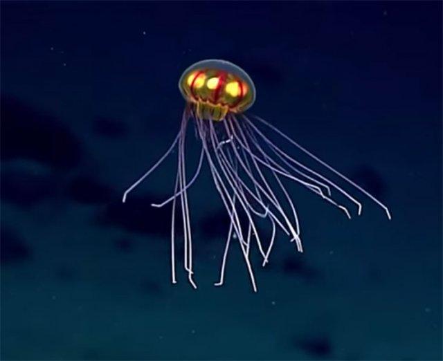 У Тихому океані виявлено «медузу-НЛО» (відео)