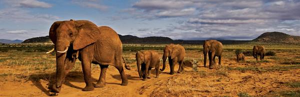 Фотошопери потішили хлопчика, який загубив іграшкового слоника (фото)