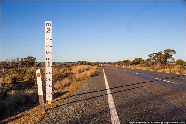 Чому на австралійських дорогах ставлять двометрову лінійку