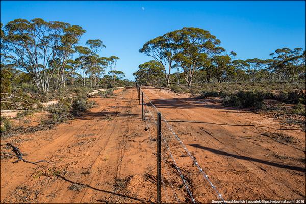 Великий австралійський паркан (фото)