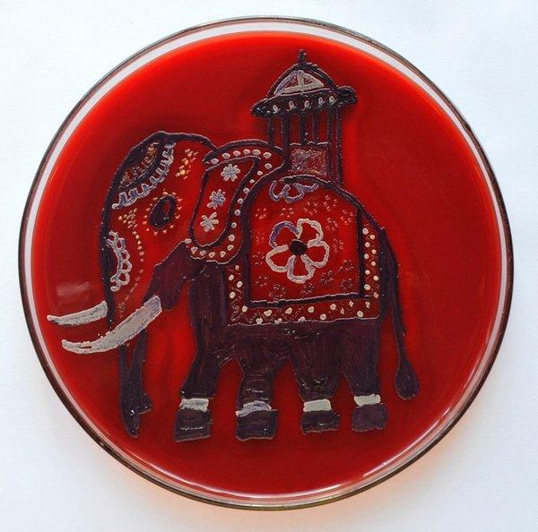Картини, створені бактеріями в чашках Петрі (фото)