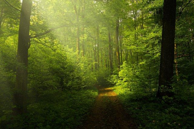 За 37 років індієць виростив ліс, більший за Центральний парк у Нью-Йорку (фото)