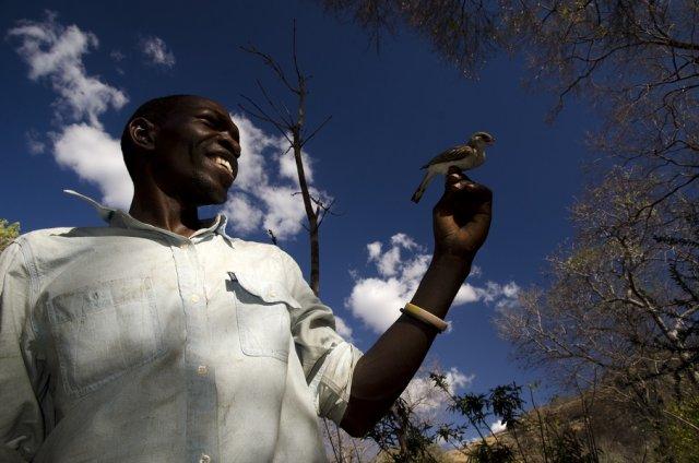 У Мозамбіку люди навчилися говорити мовою птахів (відео)