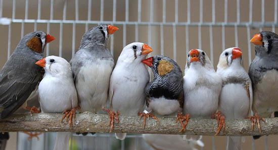 Пісні п'яних птахів