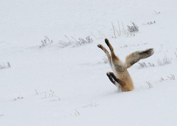 Веселі фото дикої природи (фото)