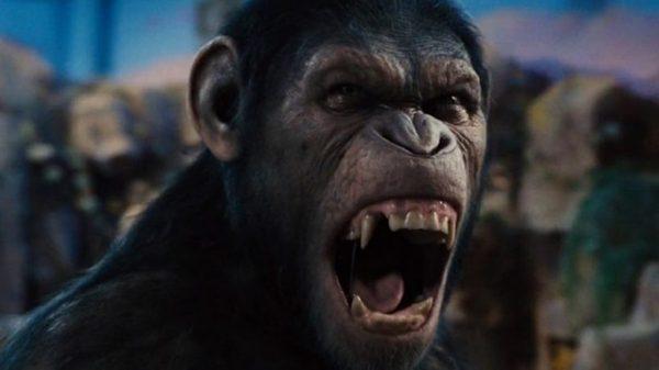 Як звучала б мова мавп, якби вони раптом заговорили? (відео)