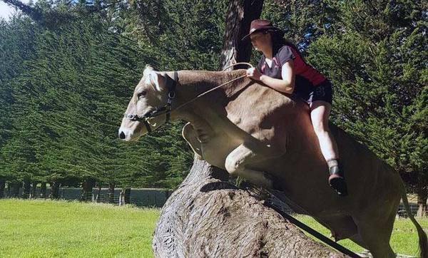 Новозеландська дівчина на спір навчила корову спортивної верхової їзди