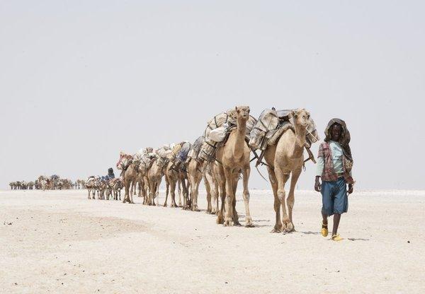 Данакільська соляна долина – найбезжалісніше місце планети (фото)