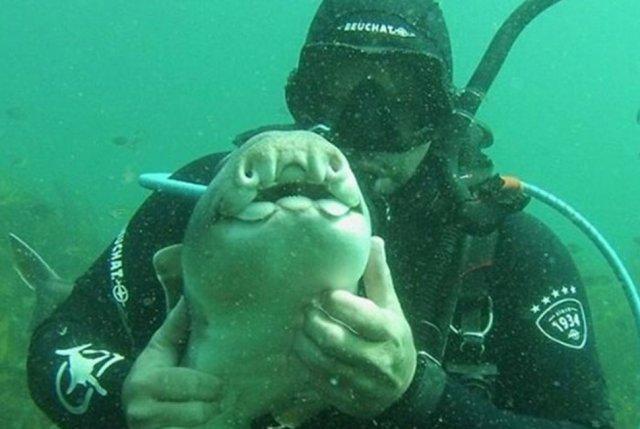 Дайвер погладив акулу, і тепер вона припливає до нього в руки знову і знову (фото)
