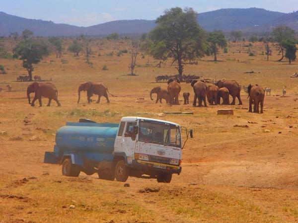 Кенієць рятує диких тварин від посухи (фото)