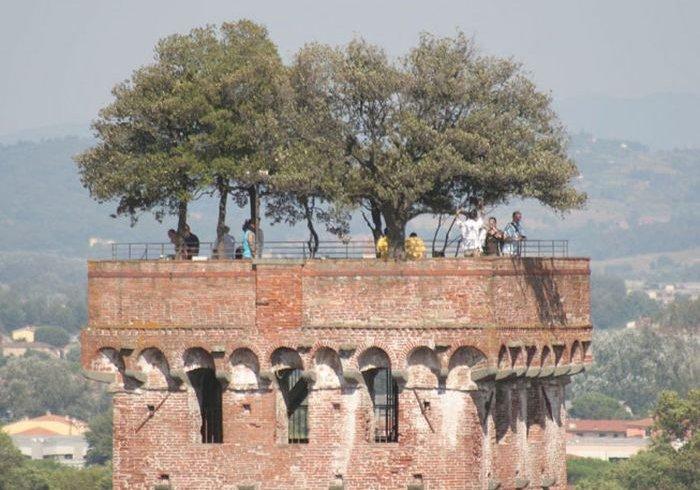 Дубовий сад на вершині вежі (фото)