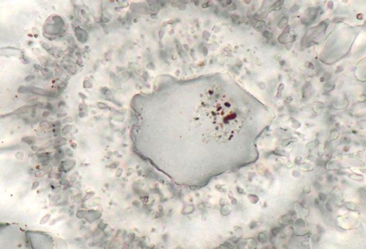 У Канаді знайдено найдавніший на Землі організм (відео)