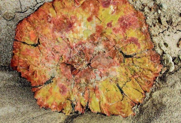 Петріфайд-Форест - скам'янілий ліс в Арізоні (фото)
