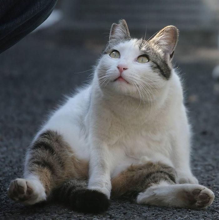 Японський фотограф фотографує бездомних котів на вулицях Токіо (фото)