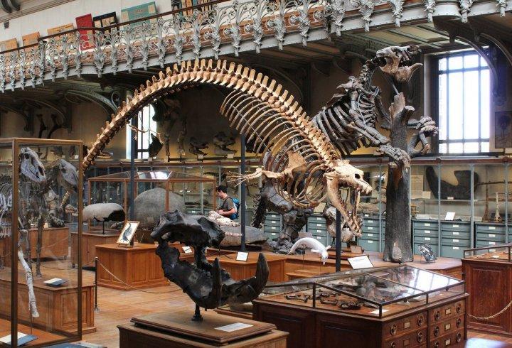 Музей палеонтології в Парижі (фото)