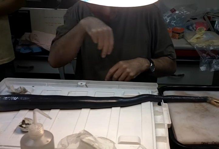 На Філіппінах знайдені істоти, які вважали вимерлими (відео)