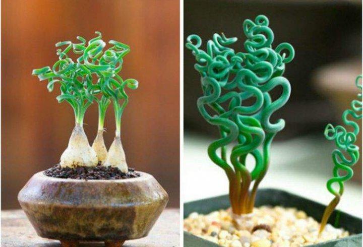 Кімнатні рослини, які виглядають як прибульці з космосу (фото)