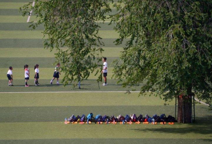 Дерево на футбольному полі (фото)
