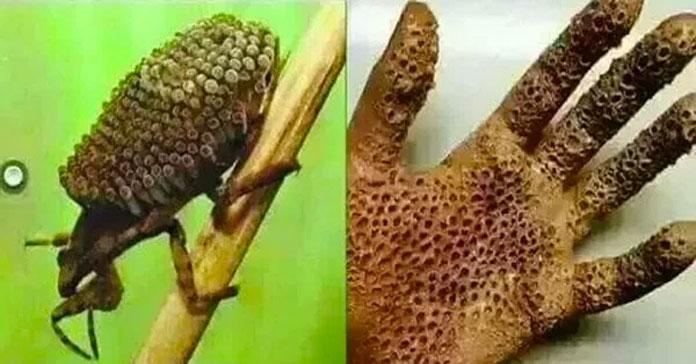 Комаха, до якої небезпечно торкатися голими руками (фото)