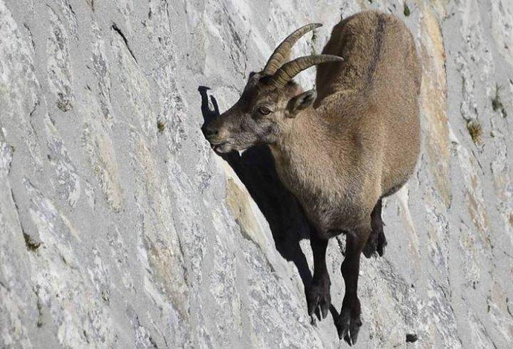 10 тварини з вражаючими супер-здібностями (фото)