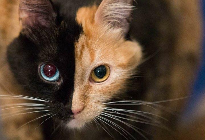 Химери у світі тварин (фото)