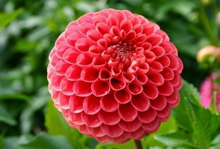 Дивовижна геометрія рослин (фото)