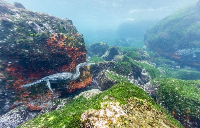 Вчені виявили підземний океан з величезним сховищем води