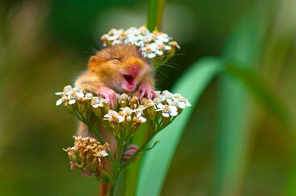 Найсмішніші фотографії тварин планети (фото)