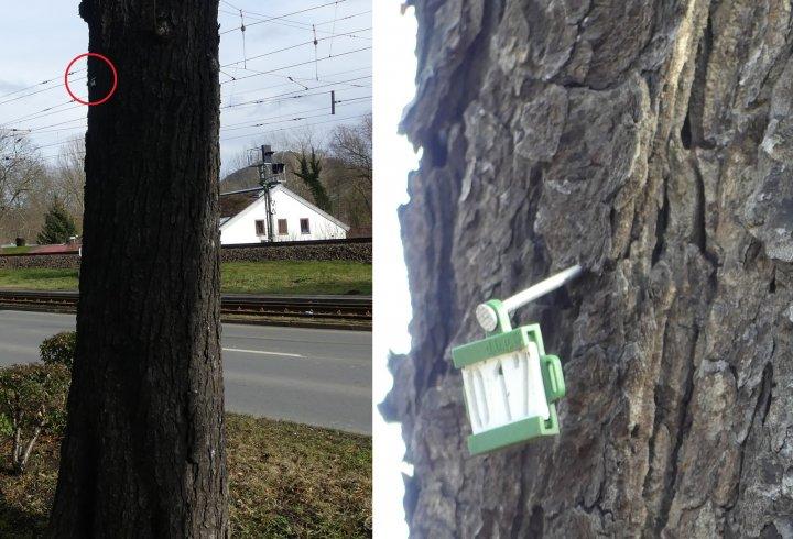 Німці і любов до порядку (фото)