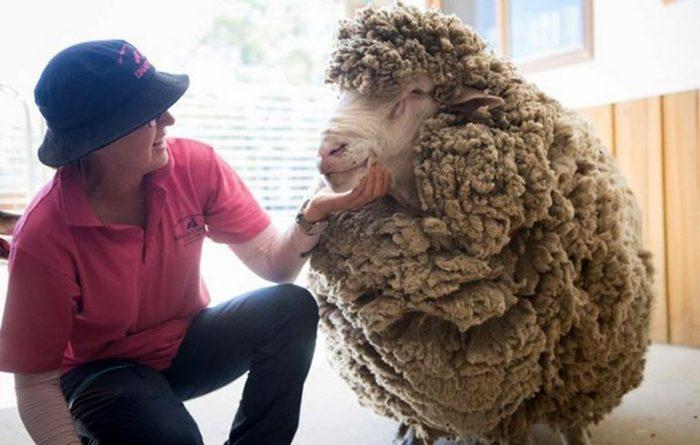 Австралійський Кокі: чотири роки не стрижений (фото)