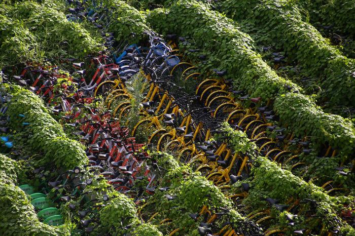 Цвинтарі велосипедів в Китаї: епічний бізнес-провал (фото)