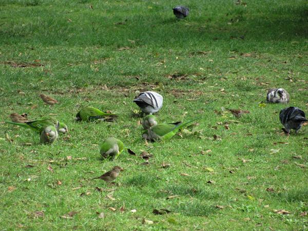 Папуги в Брюсселі (фото)