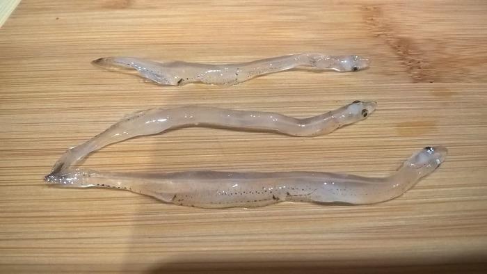 Риба-локшина - делікатес з Далекого Сходу (фото)