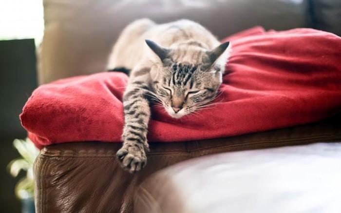 10 цікавих фактів про котів (фото)
