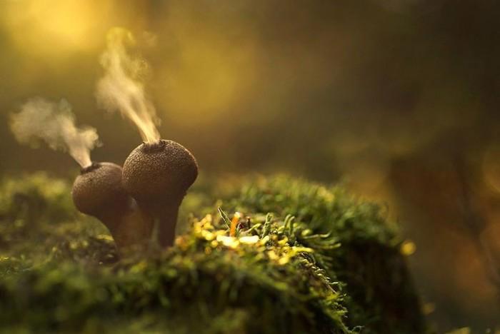10 цікавих фактів про гриби