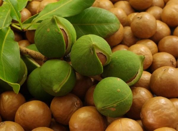 Найдорожчий горіх в світі (фото)