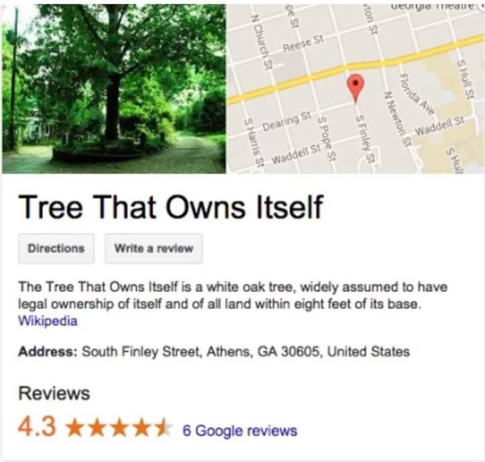 Дерево, яке належить самому собі