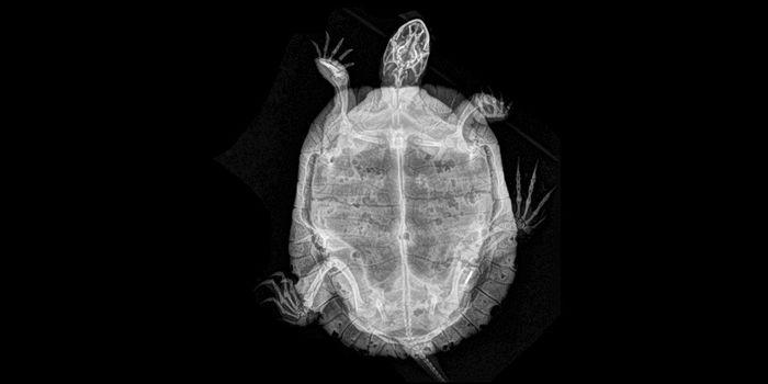 Як виглядають тварини зсередини (фото)